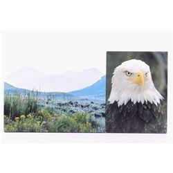 Montana Bald Eagle & Landscape Photos