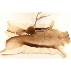Pronghorn Rug and Deer Rack