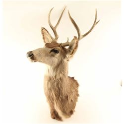 3X3 Buck Mount
