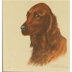 Irish Setter Dog by Leon Danchin