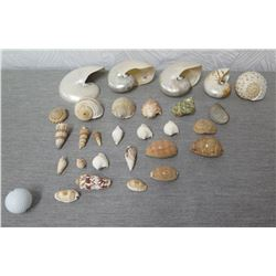 Assorted Shell Collection: Nautilus (Retail $15-$38 each) , Cone, Tonna, etc