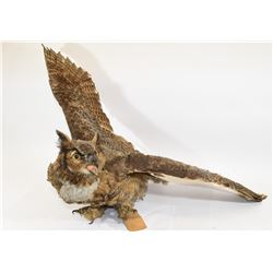 Great Horned Owl Mount