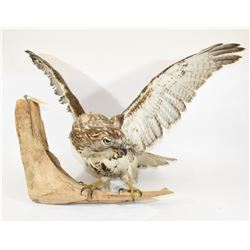 Broad-Winged Hawk Mount