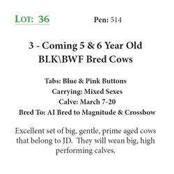 3 - Coming 5 & 6 Year Old BLK\BWF Bred Cows