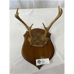 Vintage Mounted Deer Antlers