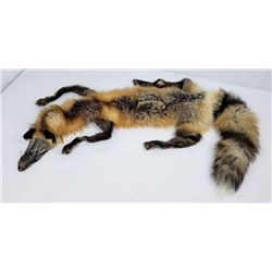 Montana Taxidermy Tanned Wild Cross Fox