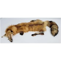 Montana Taxidermy Tanned Wild Red Fox