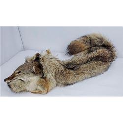 Rendezvous Native American Beaded Coyote Headdress