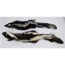 Pair of Montana Taxidermy Tanned Wild Skunks