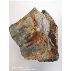 PETRIFIED WOOD FROM A COAL MINE HINTON ALBERTA