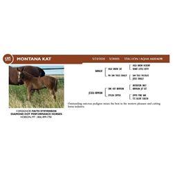 Montana Kat