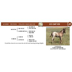 CC Cat CD