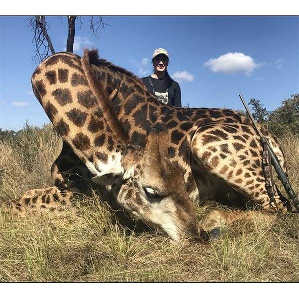Namibian Damara Dik-Dik and Giraffe Hunt with Wild Namibia Safaris
