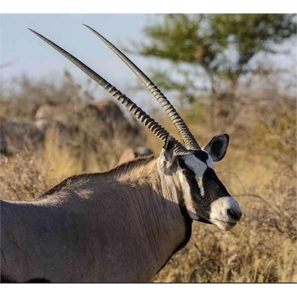South African Plains game Hunt for Three Hunters with Mynyati Safaris