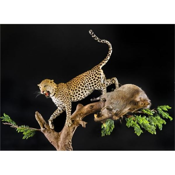 Taxidermy Credit for Life-Size Work from Creative Concepts Taxidermy