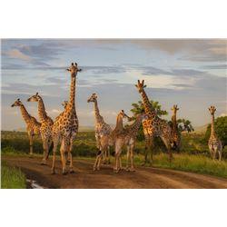 An African Photo Safari