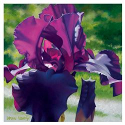 """Brian Davis, """"Passionate Purple Iris"""" Limited Edition Giclee on Canvas, Numbered and Hand Signed wit"""