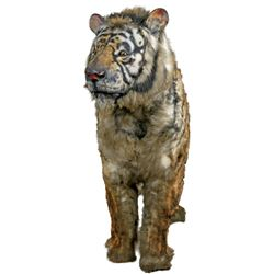 'Shere Kahn' animatronic tiger figure from The Jungle Book.