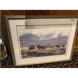 Framed Musk Ox large picture