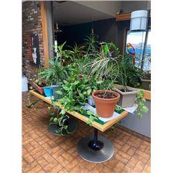 Lot of Live Plants