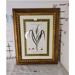 Framed Male and Female Flowers on the same Plant Picture