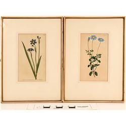 William Curtis Botanical Prints (2)  (108703)