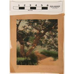 Shadowed Oak by Wallace Nutting  (122034)