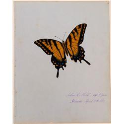 Butterfly by Arthur C. Nahl.  (117451)