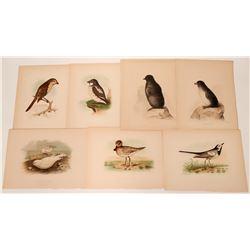 Prints of Birds.  (122207)
