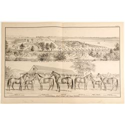 Lithograph: Stock Farm of Theo. Winters  (81322)