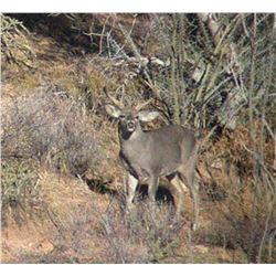Couse Deer Hunt For One Hunter on 2023
