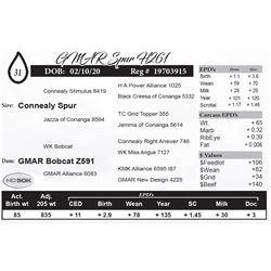 GMAR Spur H261