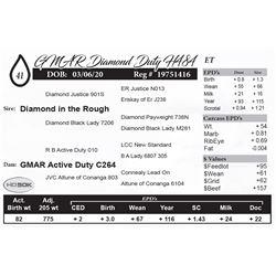 GMAR Diamond Duty H484