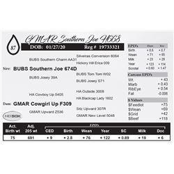 GMAR Southern Joe H668