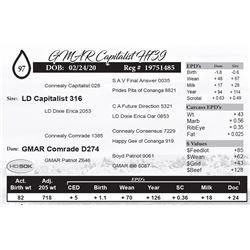 GMAR Capitalist H739