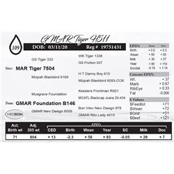 GMAR Tiger H511