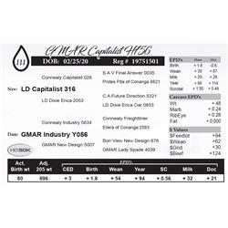GMAR Capitalist H756