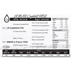 GMAR Capitalist H752