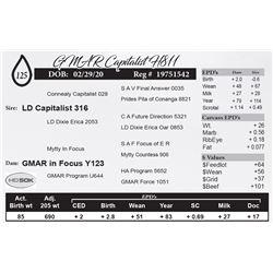 GMAR Capitalist H811