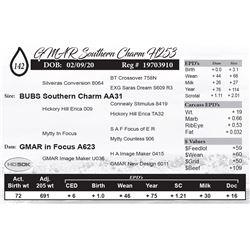 GMAR Southern Charm H253
