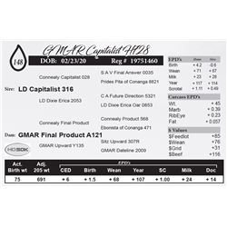 GMAR Capitalist H728