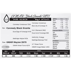 GMAR Black Granite H711