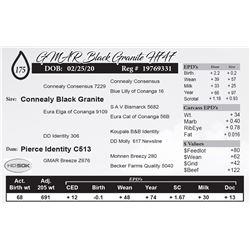 GMAR Black Granite H747