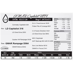 GMAR Capitalist H774