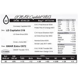 GMAR Capitalist H813