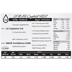GMAR Capitalist H837