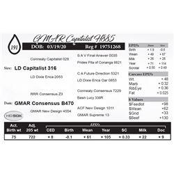 GMAR Capitalist H885