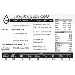 GMAR Capitalist H692