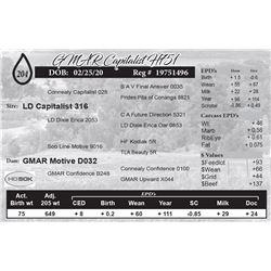 GMAR Capitalist H751