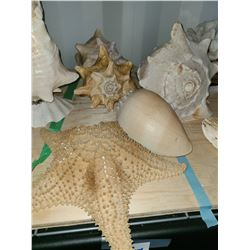 Sea Shells Cat A